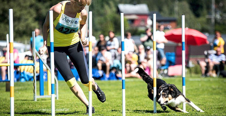 Sport Dog Academy, Älta, Stockholm