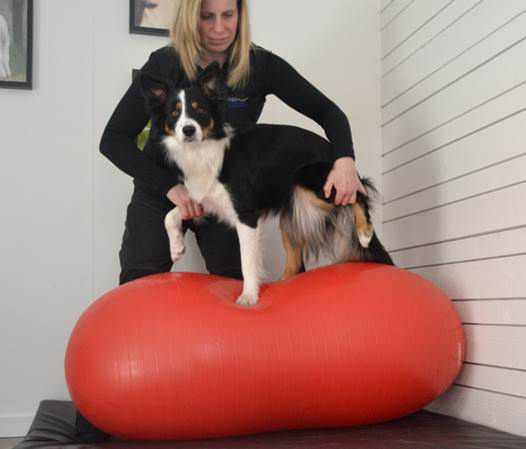Sport dog academy, Fotograf Hanna Solstrand
