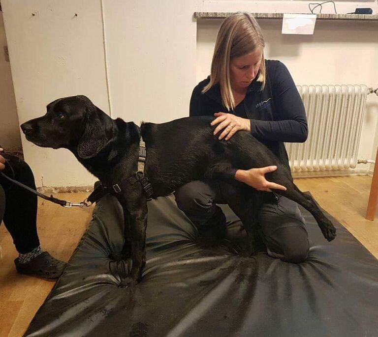 Hundkiropraktik…och mer är inte nödvändigtvis bättre!