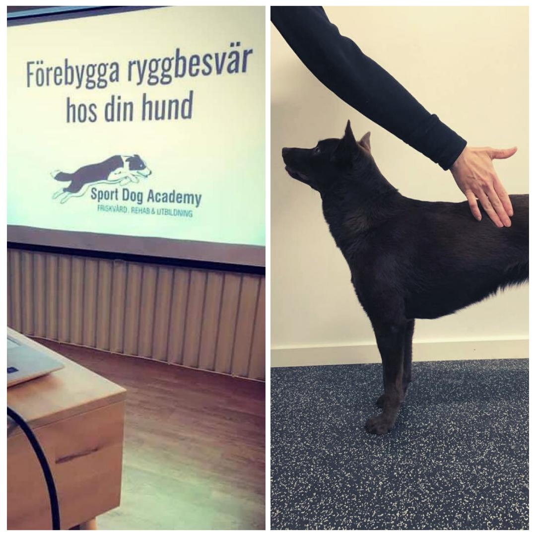 Kombopaket teori och fysövningar – förebygga ryggbesvär hos din hund